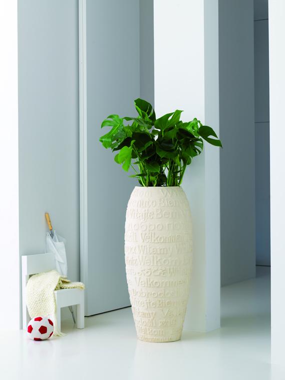 Die Sanseveria Genannt Bogenhanf Ist Eine Beliebte Feng Shui Pflanze Und Steht In Der XL Version Hervorragend Im Wohnzimmer Gut Geeignet Sie Auch